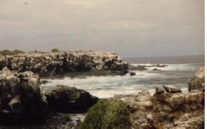 215 domaine des iguanes marins